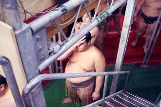 Sumo Tournament - Osaka, Japan 2012